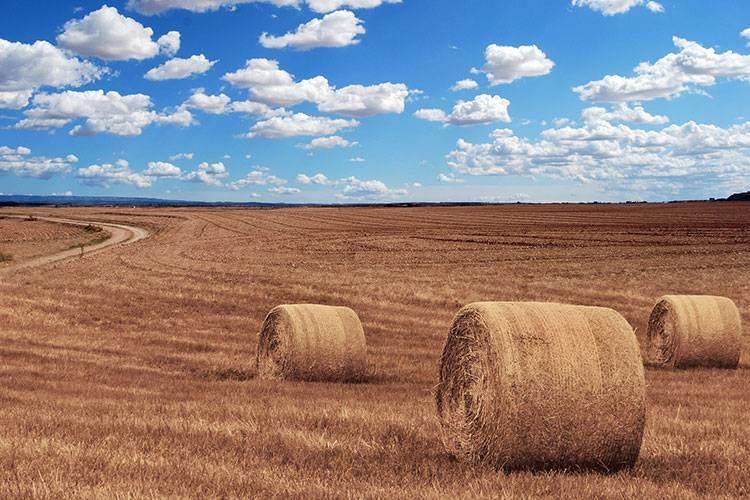 Translation for Agriculture